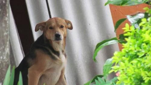 Foto: Silvio L. Mocoa. Al fondo o detrás del perro Guardián un techo que contiene asbesto. 2013.