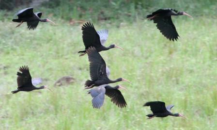 130716 aves acuaticas