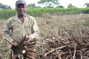 """José Virgilio Ocoró, """"Don Gligerio"""", cultiva yuca desde hace 30 años y con su producción se desarrollan experimentos para producción de bioetanol a partir de yuca. / Fotos Mariana Escobar"""