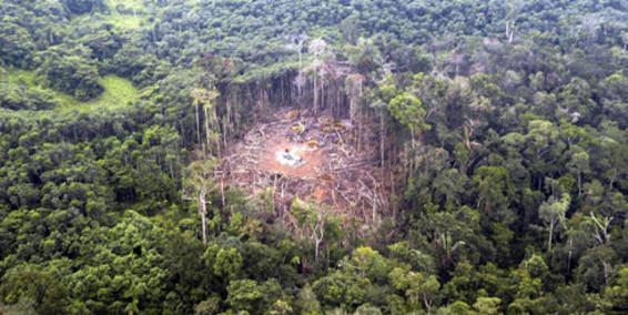 13102214 deforestacion eltiempo