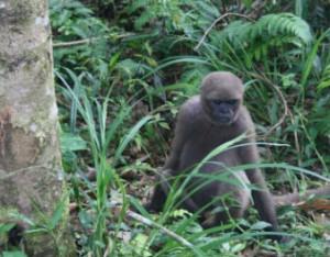 Monos en la reserva de Paway. Laura Garzón