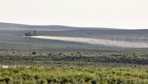 Fumigaciones aéreas con glifosato destruyen plantaciones de Pimienta en Putumayo.