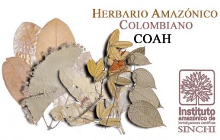 140214 herbario sinchi