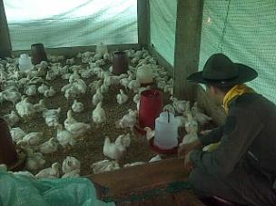 Proyecto de Avícola en Villagarzón