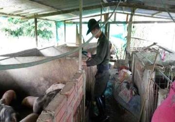Proyecto de Porcicultura en Puerto Asís