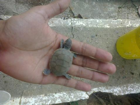tortugas 3