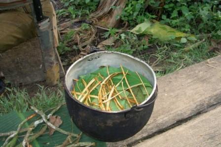 Las autoridades presumen que el joven británico tuvo una reacción negativa a la ayahuasca. / Terpsícore – Wikimedia