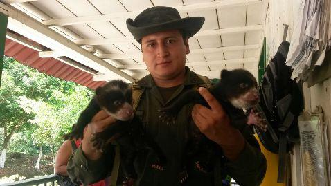 Policía de Protección al medio ambiente incauta dos cachorros de Oso de Anteojos