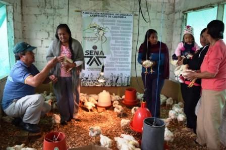 La unidad productiva avícola Propollos opera en el municipio de Santiago y cubre el 50% de la demanda de este alimento en el Alto Putumayo.