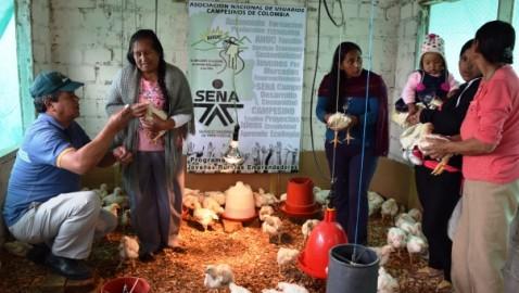 En el Alto Putumayo consumen pollo de mejor calidad