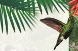 Lanzamiento de la Guía de Campo de Aves del Valle de Sibundoy y Manual de Monitoreo del Oso Andino