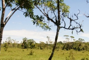 Por las condiciones selváticas de la región, el verano es bien recibido por los ganaderos debido a que genera un aumento en la producción. Foto: restituciondetierras.gov.co.
