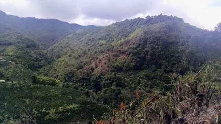 Estas fotografías tomadas por los expedicionarios evidencian la problemática del aumento de hectáreas en el cultivo de café.