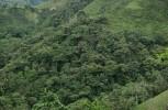 Colombia ha perdido más de 600.000 hectáreas de bosque por la siembra de coca
