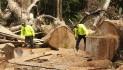 El país pierde 48.000 hectáreas de bosque al año