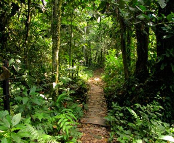 Sendero Paway - Vda San José del Pepino. Mocoa www.paway.com.co