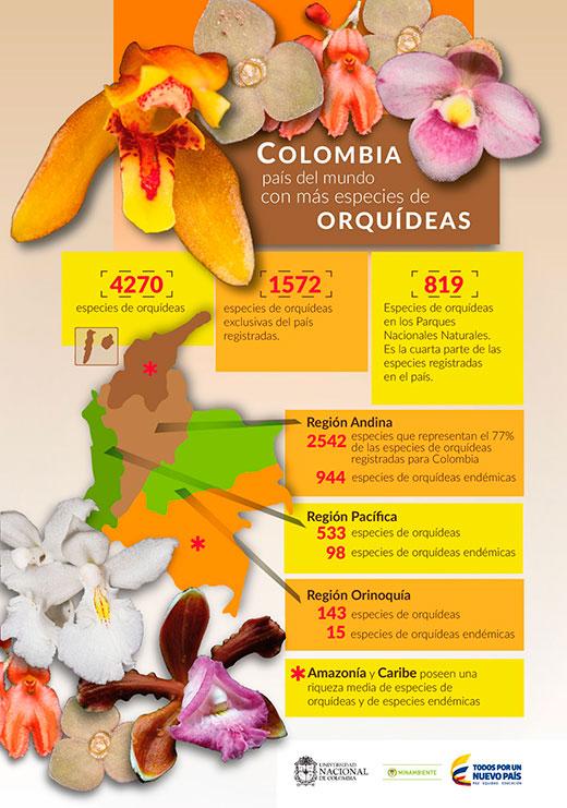 06-orquideas