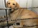 Hasta 32 millones de pesos pagarían quienes maltraten animales