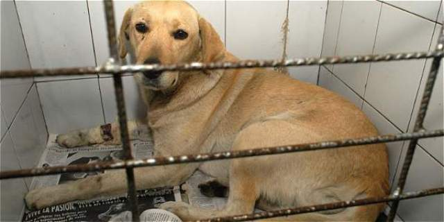 Las penas por maltratar animales en Colombia tendrán hasta 36 meses de cárcel.