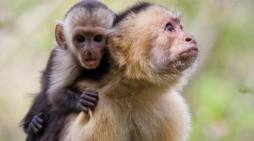 Colombia es el quinto país en número de especies de primates