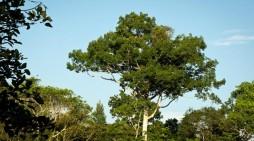 El bosque amazónico es una de las principales riquezas de Colombia