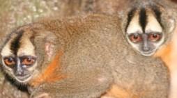 Corpoamazonia no se opone al desarrollo de procesos de investigación científica y en diversidad biológica en la región