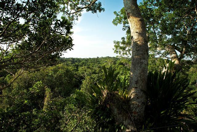 Foto: Dosel Parque Nacional Natural Amacayacu, Leticia Amazonas. Instituto SINCHI/Iván Montero