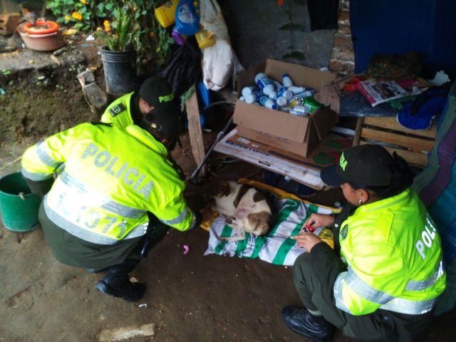 Policía en Sibundoy rescata cachorro herido con arma blanca