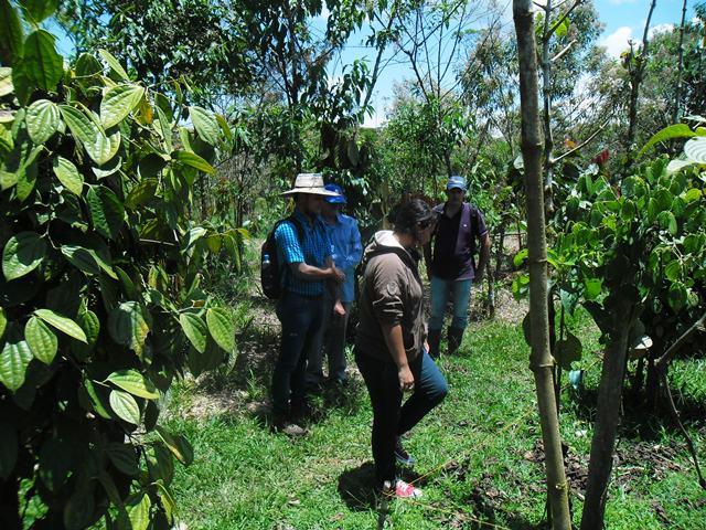 aprendices del SENA en proyecto de investigación medirán el efecto de microorganismos eficientes para mejorar los suelos del Putumayo