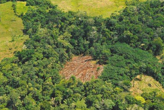 En la Amazonia aún se concentra el 45 % de la deforestación nacional. / Herminso Ruiz