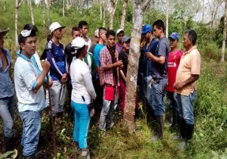 En Caquetá existen poco más de mil productores de caucho que ven en dicho cultivo una nueva opción de paz.