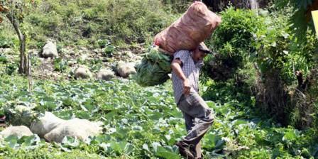 Foto: Archivo / EL TIEMPO La cobertura del Tercer Censo Agropecuario fue del 98,9 %.