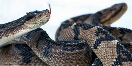 Foto: Jaiver Nieto / EL TIEMPO El Serpentario de la Universidad de Antioquia, que mantiene en cautiverio a varias especies de serpientes con fines investigativos