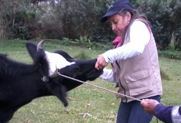 La mujer ganadera del Putumayo se destaca por su dedicación y entrega a la hora de hacer las labores del campo. Foto: Ana Patricia Coral.