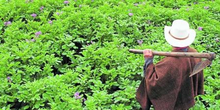 Varias áreas ganaderas ya están produciendo más por cuenta de los campesinos que han retornado, según la URT.