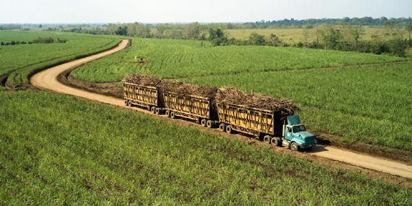 Foto: Archivo / EL TIEMPO El Valle del Cauca es un departamento privilegiado en tierras para desarrollar proyectos de alimentos.