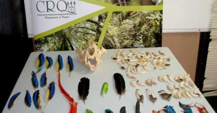 Personal de la universidad del Quindío trabaja en la identificación de los restos de animales que fueron decomisados.