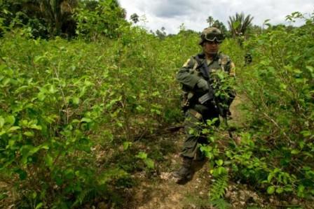 El Ejército en medio de las plantaciones de coca, en zona rural de Puerto Asís. / AFP