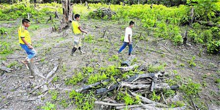 Foto: Héctor Fabio Zamora EL TIEMPO Según el último reporte del Ideam, durante el año pasado se perdieron 9.164 hectáreas de bosques naturales.