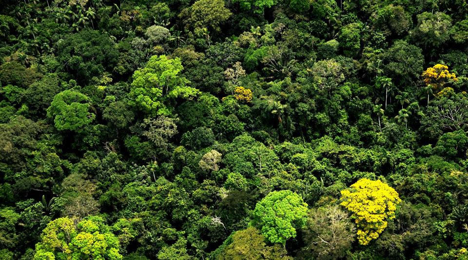 bosques-deforestacion-amazonia-ganaderia-especiales-colombia-1