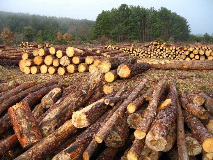 Existe preocupación por las recientes alertas de deforestación en esta zona.