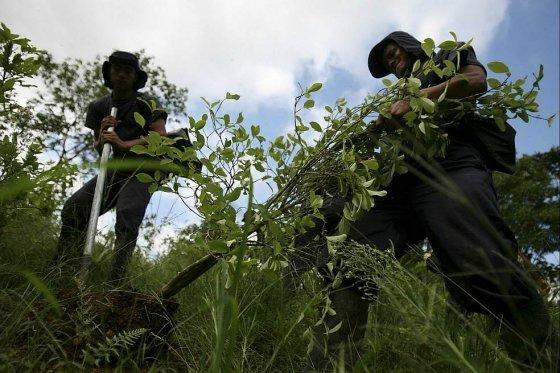 Colombia sigue siendo el productor número uno de la coca que llega a Estados Unidos.Archivo