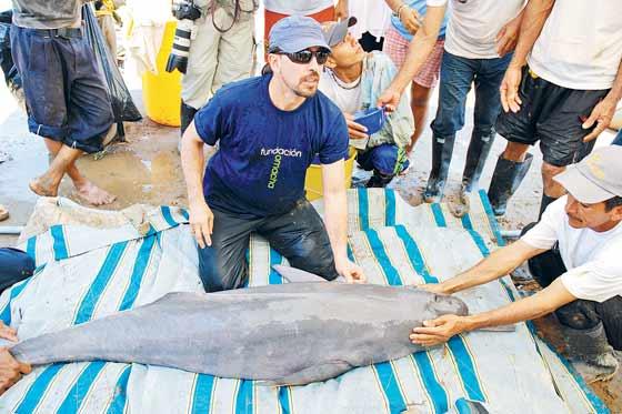 """""""Por un delfín pagan hasta $45.000"""""""