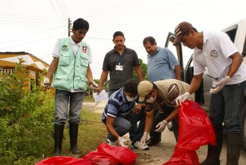 Jornada de recolección de caracol gigante africano en Putumayo