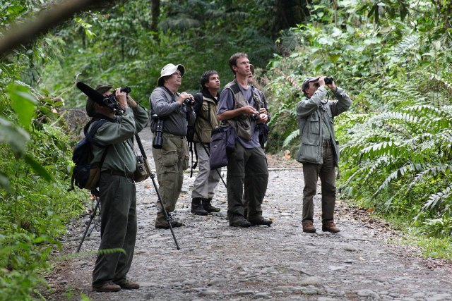 Por primera vez el Departamento del Putumayo participará en un Conteo Navideño de Aves