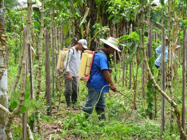 Víctimas de la intimidación y mal pago Colombianos trabajan en el Ecuador