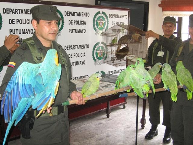 Un total de 12 especies  silvestres fueron incautadas por la Policía Nacional.