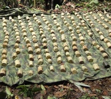Halladas 800 minas anti persona en el Putumayo.