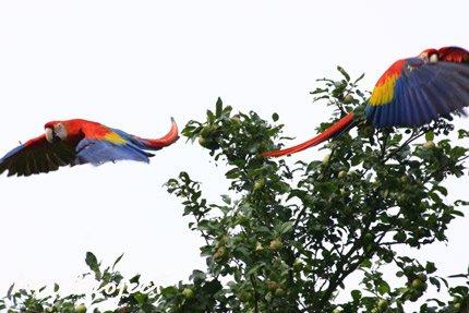 Corpoamazonía se une a la celebración del Día Internacional de las Aves