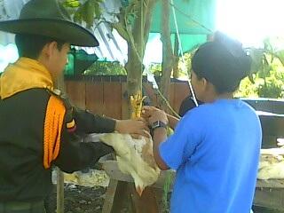 Carabineros de la Policía adelantan proyecto productivo de avicultura en el municipio de Piamonte.